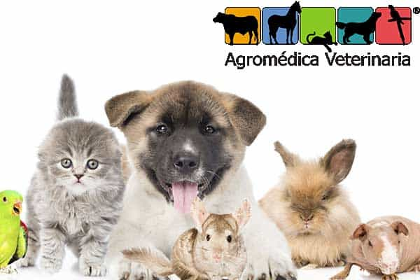 agromed-vet