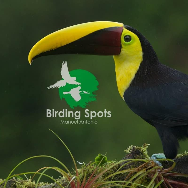 birding_11-1