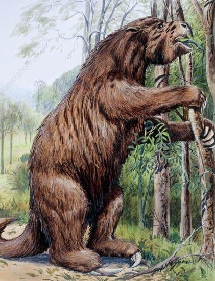 1-sloth-ancestor