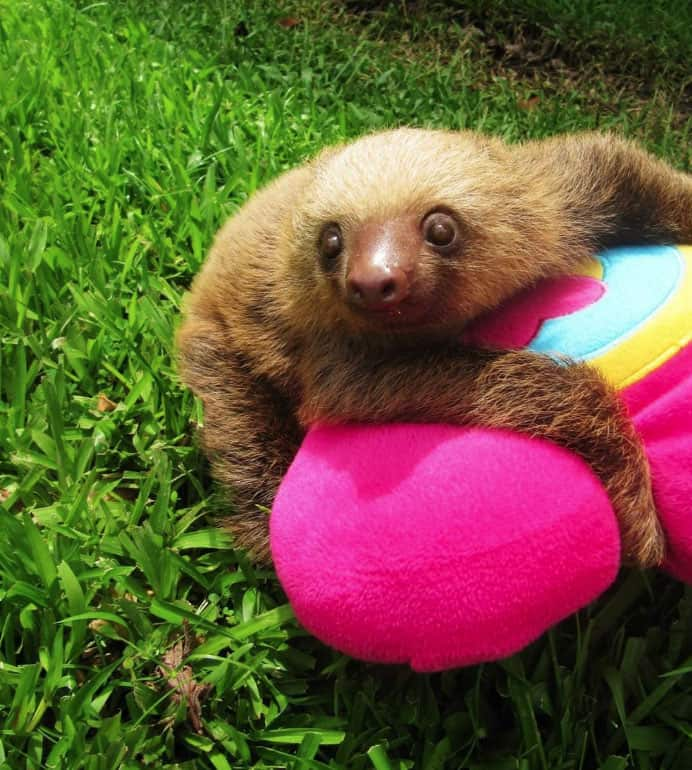 1-sloth-plush-costa-rica