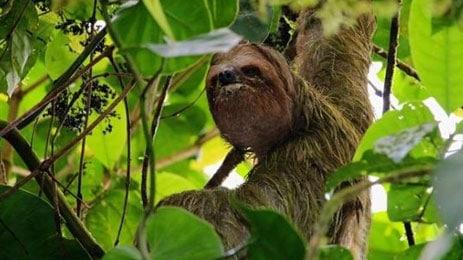 arenal-mistico-sloths-la-fo