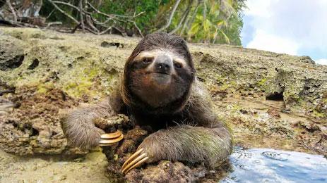 cahuita-park-sloth-costa-ri