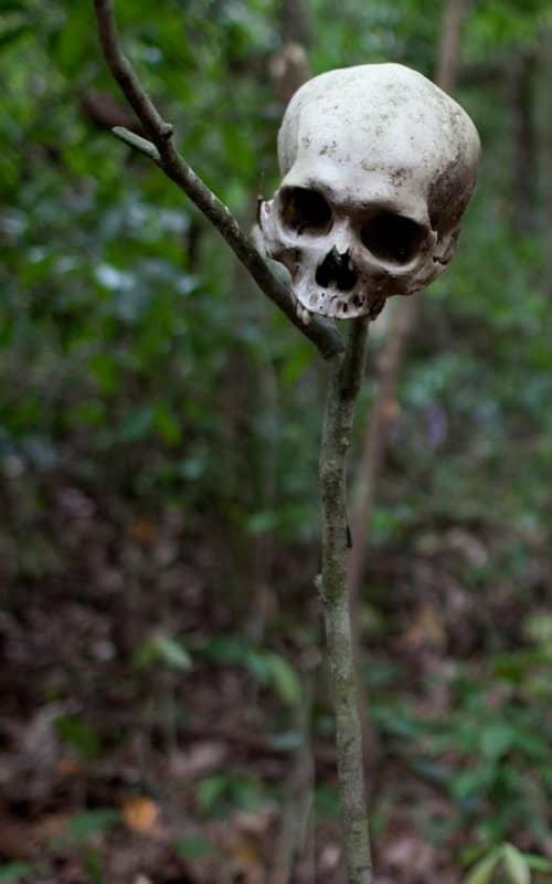 nature-danger